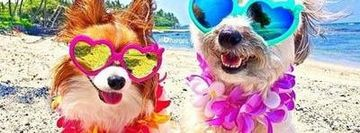 ALOHA DOG FUN IN THE SUMMERTIME